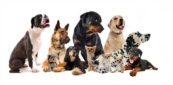 Buzzards Bay Veterinary Associates